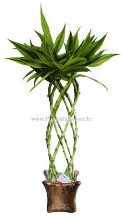 1941 Bambu da Sorte Alto