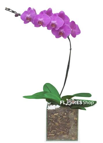 2131 Orquídea Lilás