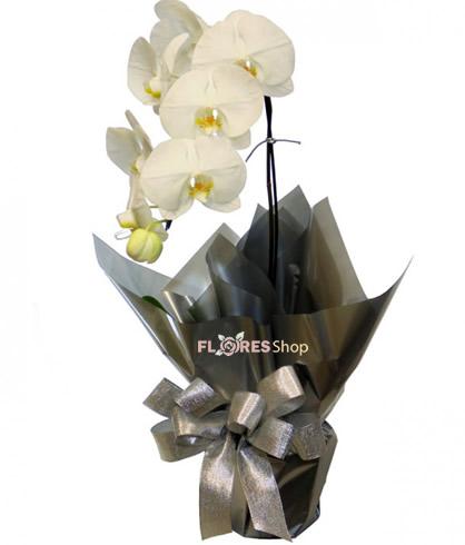 2560 Linda Orquídea