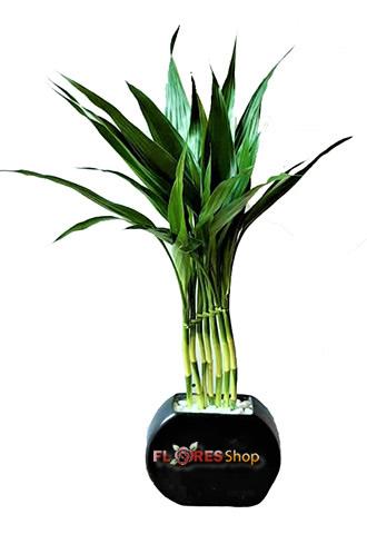 3363 Adorável Bamboo