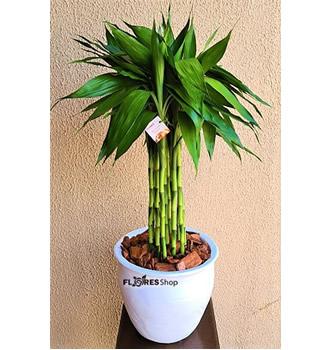 4501 Elegante Bambu 70cm