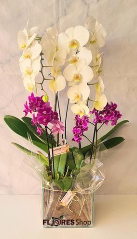 4596 Orquídeas em Jardim
