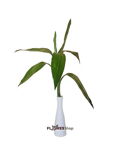 4597 Uni Bambu