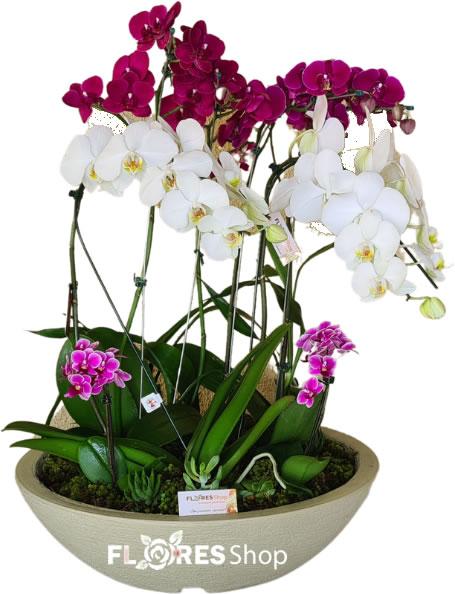 5096 ✯ Majestosa Orquídea ✯