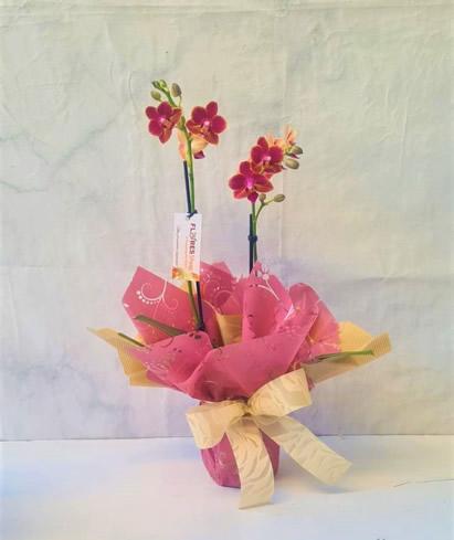 5139 Mini Orquídea Embalada