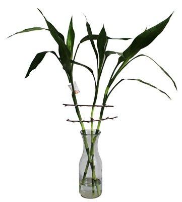 518 Trio Bamboo da Sorte