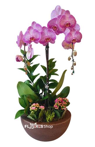 5206 Orquídea Amanda