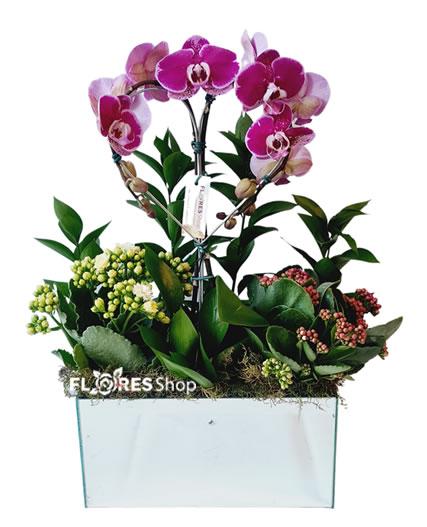 5207 Orquídea Natália
