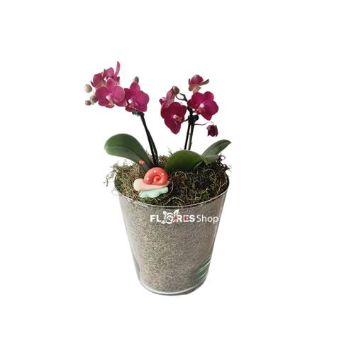 5208 Orquídea Baby